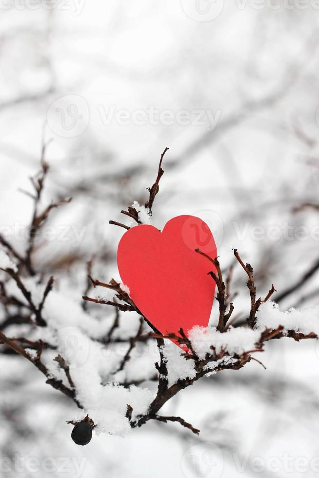 red heart on snow tree photo