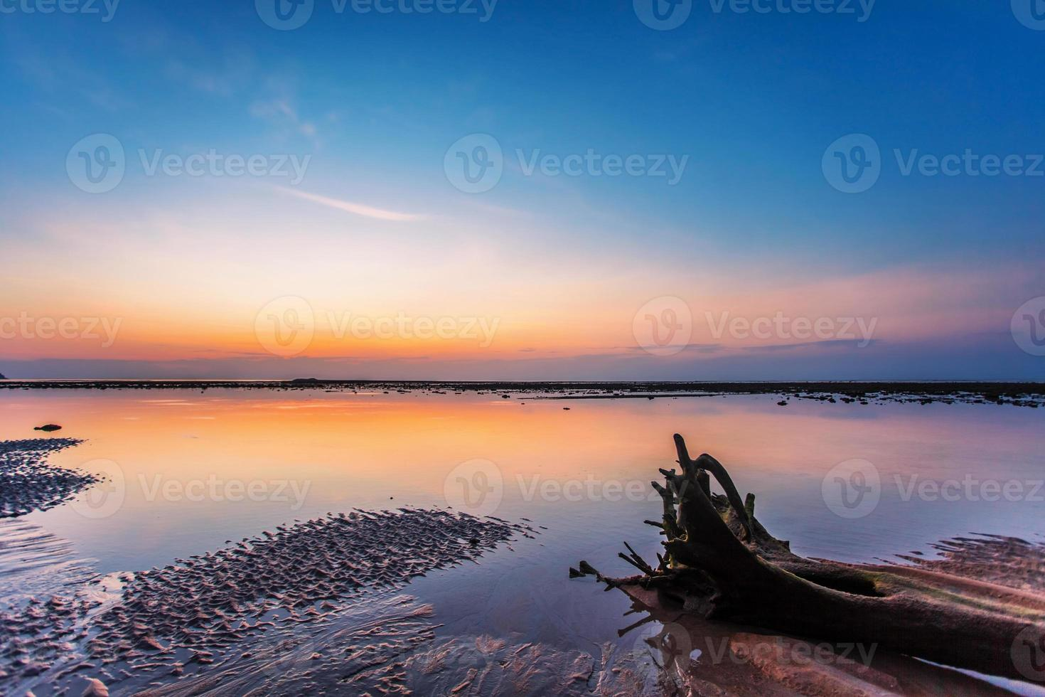 Tronco de árbol muerto en la playa tropical foto