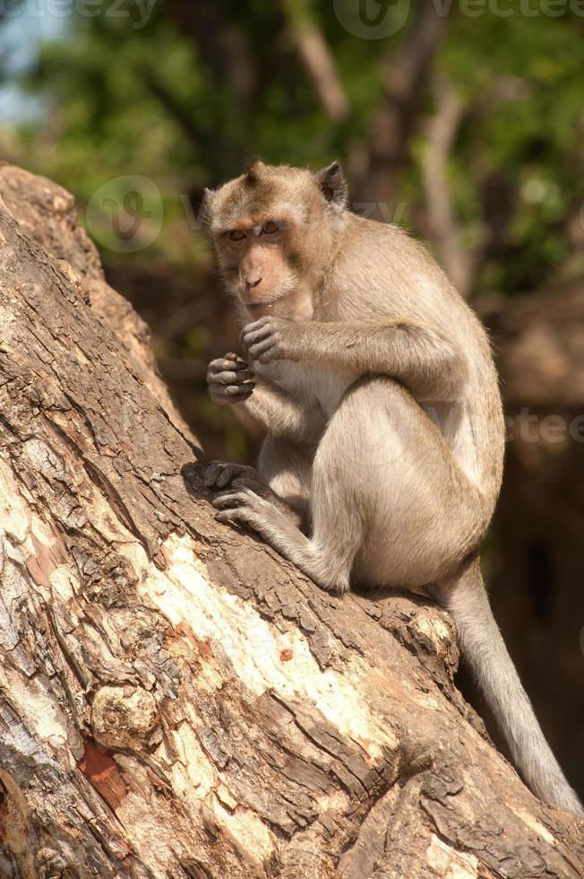 Monkey siting on tree. photo