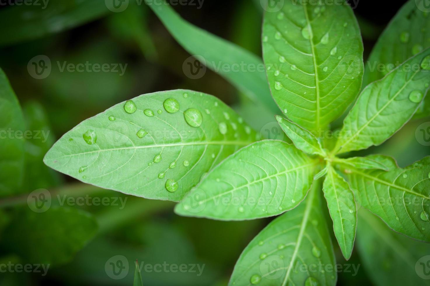 Beautiful green leaf with drops of water photo