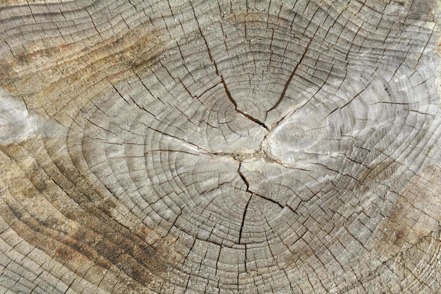 Tree trunk rings texture background photo