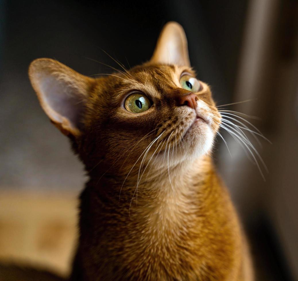 gato marrón mirando hacia arriba foto
