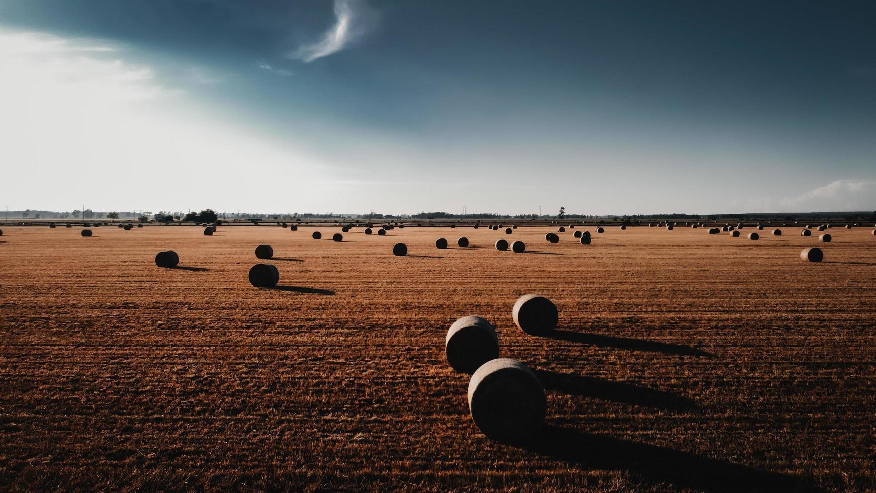 Brown grass field under blue sky during daytime photo