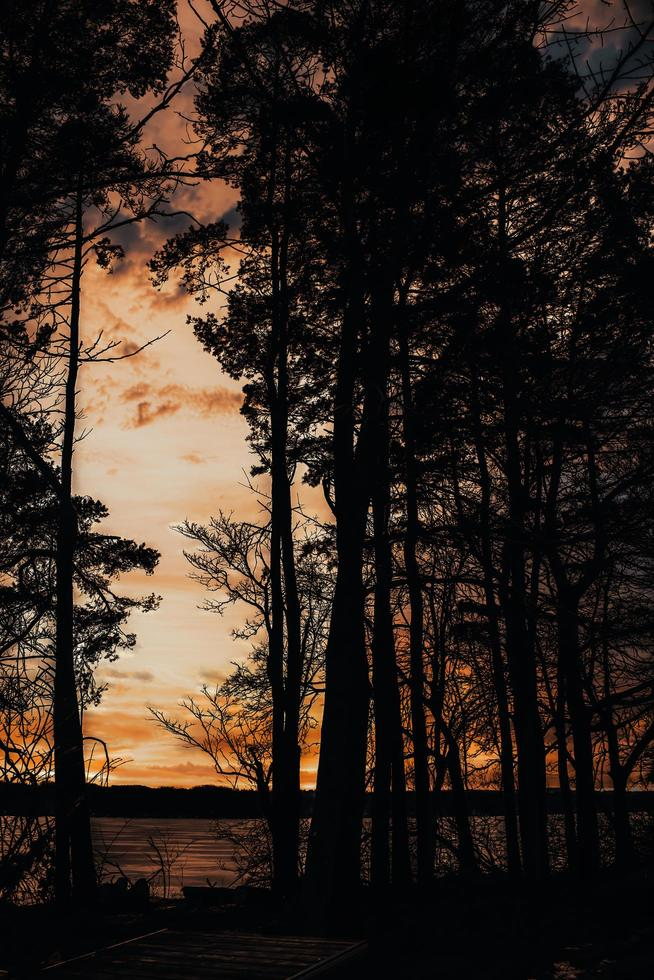 Silhouette of trees under cloudy sky during sunset photo