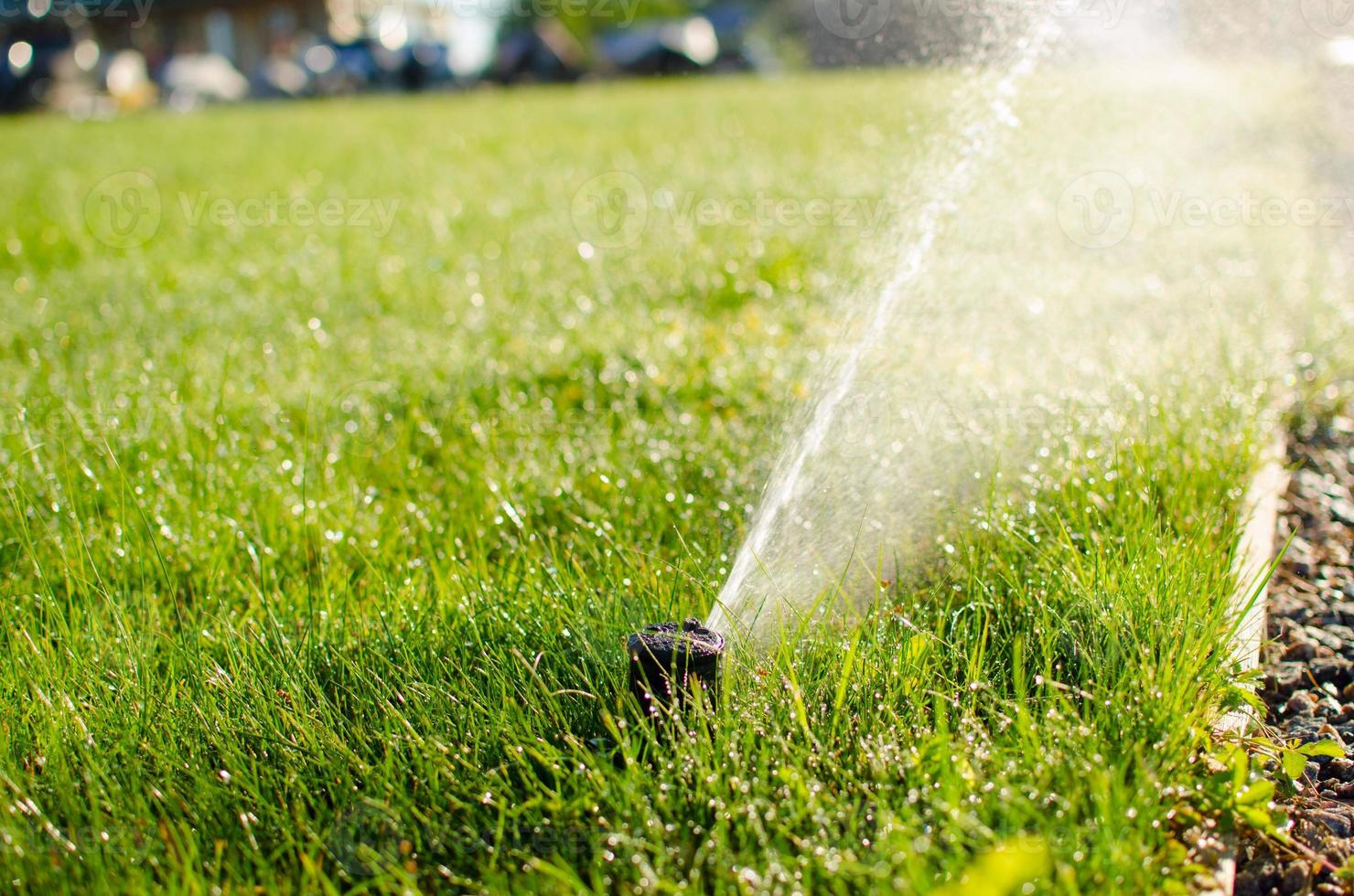 sprinkler on the lawn photo