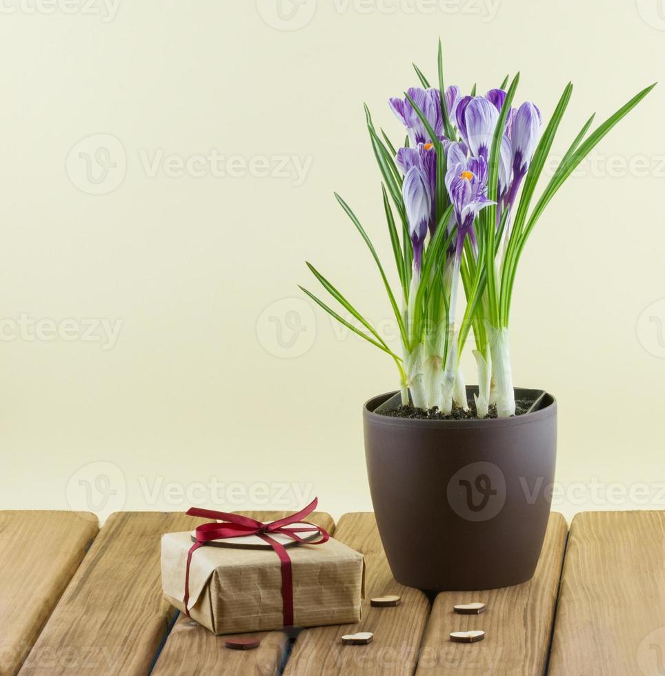 flores de açafrão em um vaso com caixa de presente e corações foto