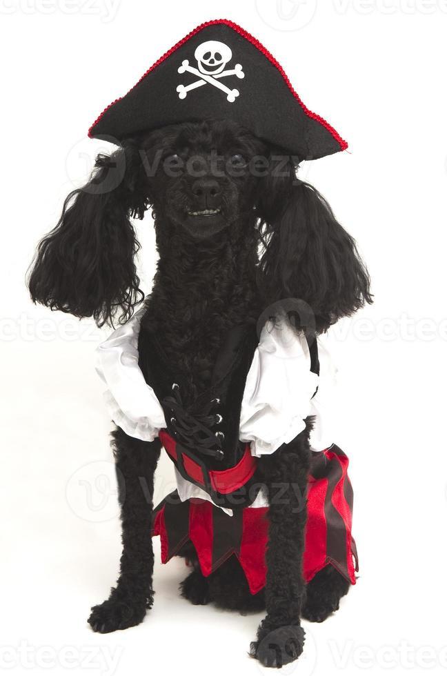 poedel piraat foto