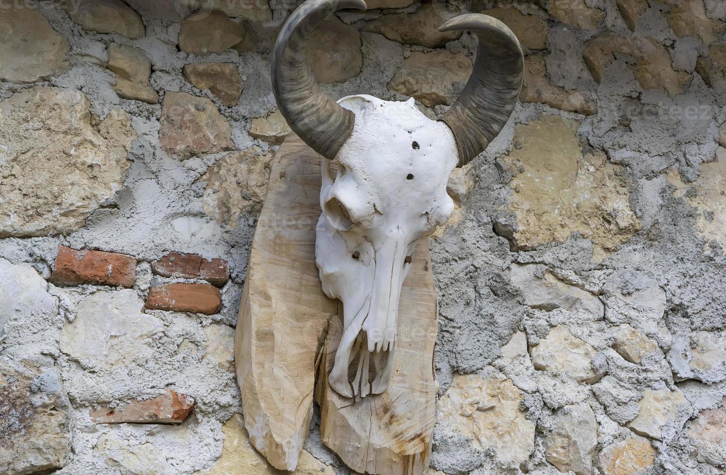 el cráneo de un carnero foto