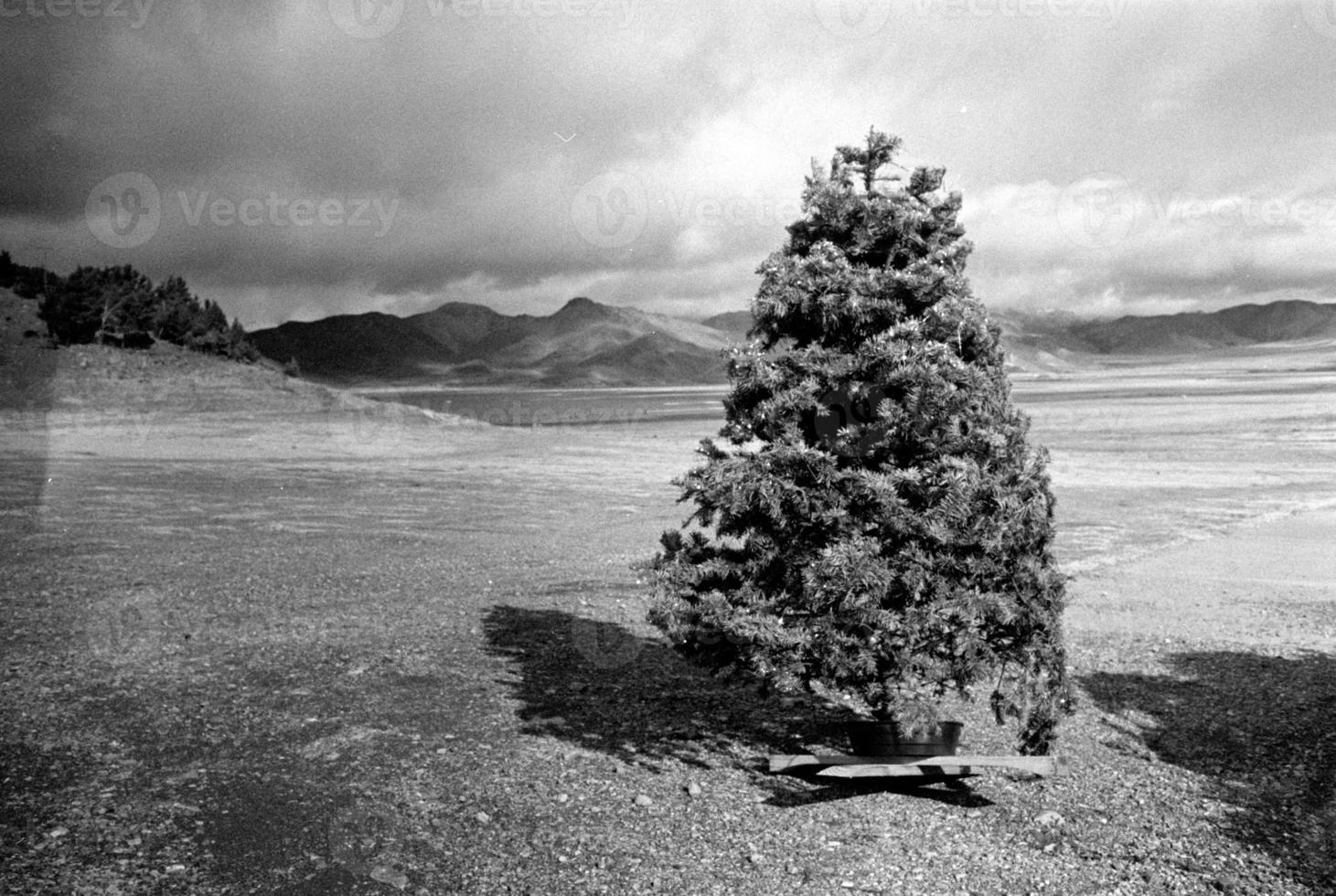 escapada del árbol de navidad foto