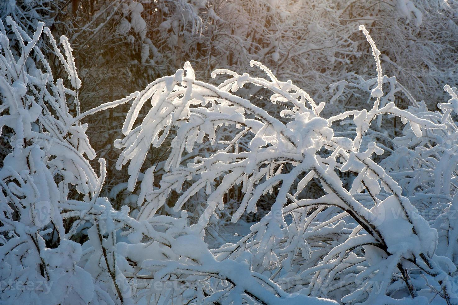 Tree branches covered with snow photo