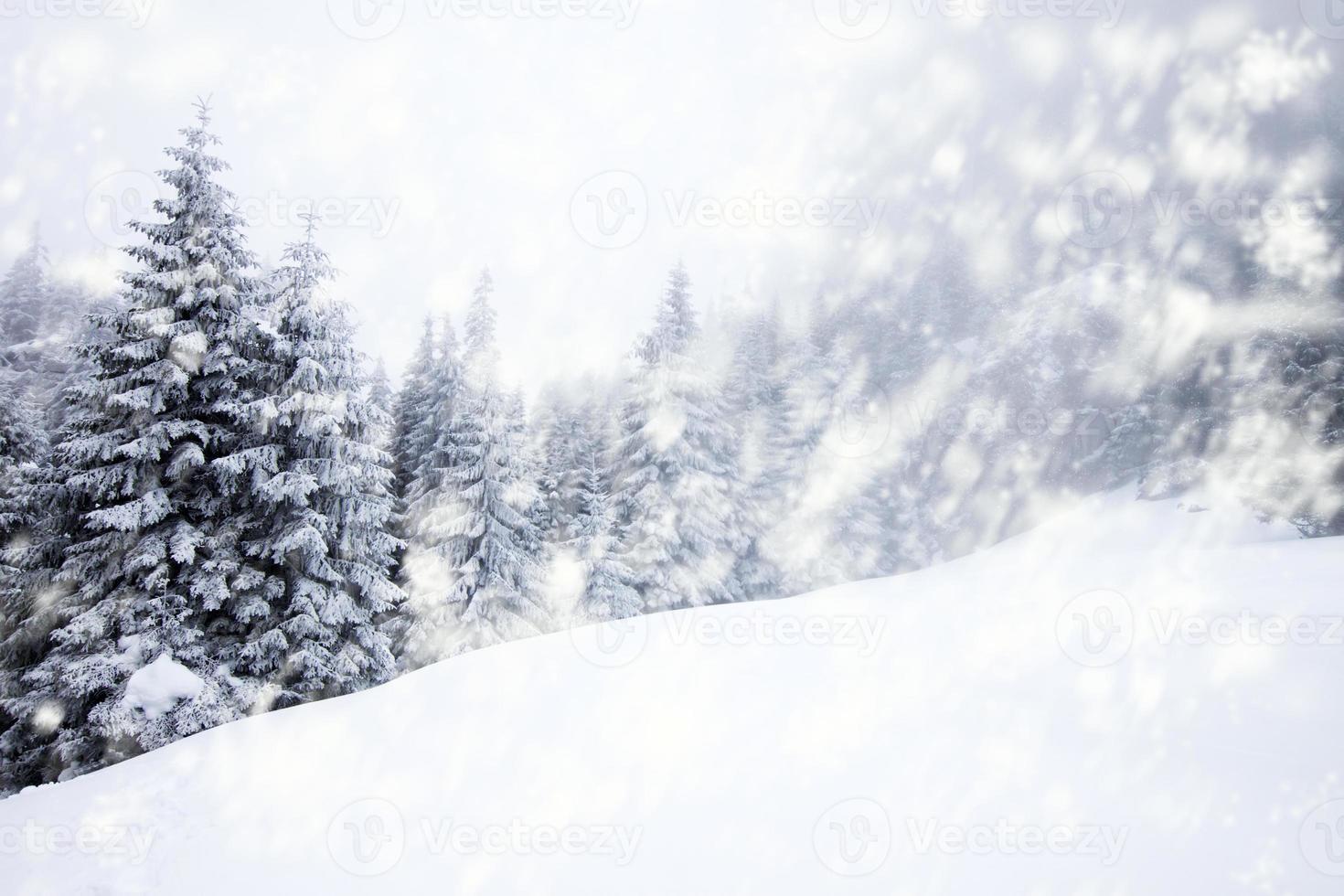 fondo de navidad con abetos nevados foto