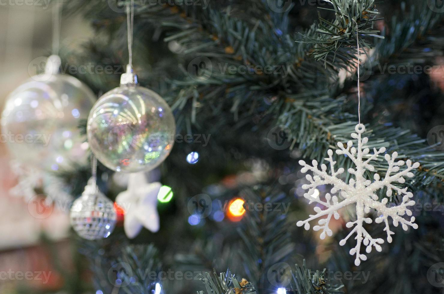 Arboles de navidad foto