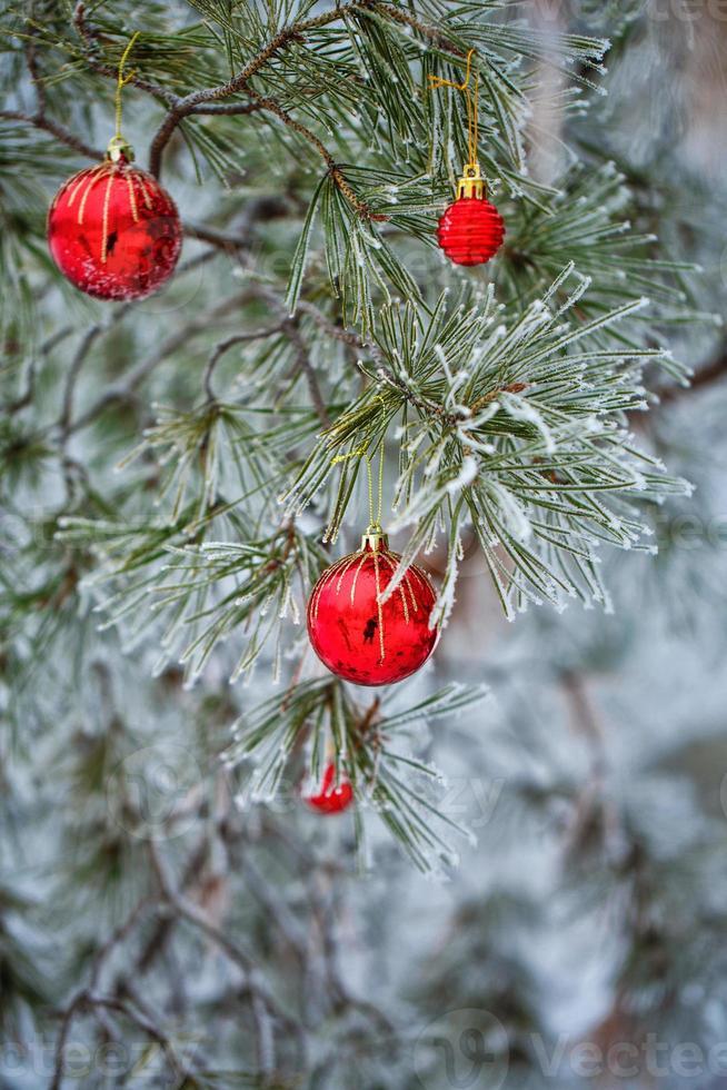 bolas vermelhas de natal foto