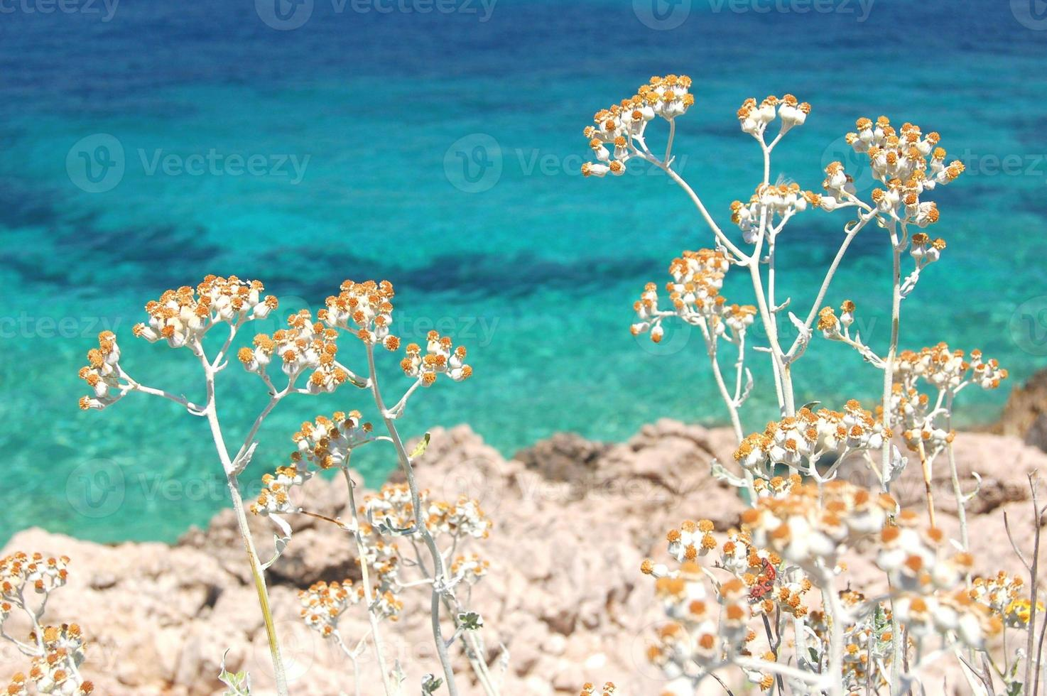 Pintoresco paisaje de verano escénico de la costa dálmata, Croacia foto