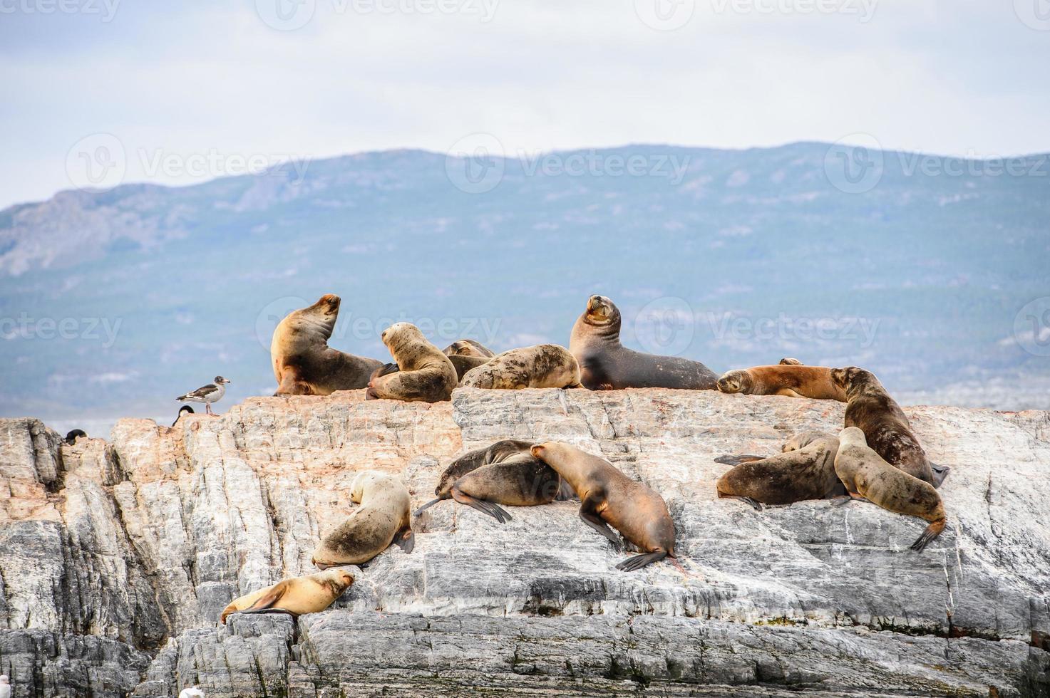 Animals on the Beagle Channel, Tierra del Fuego photo