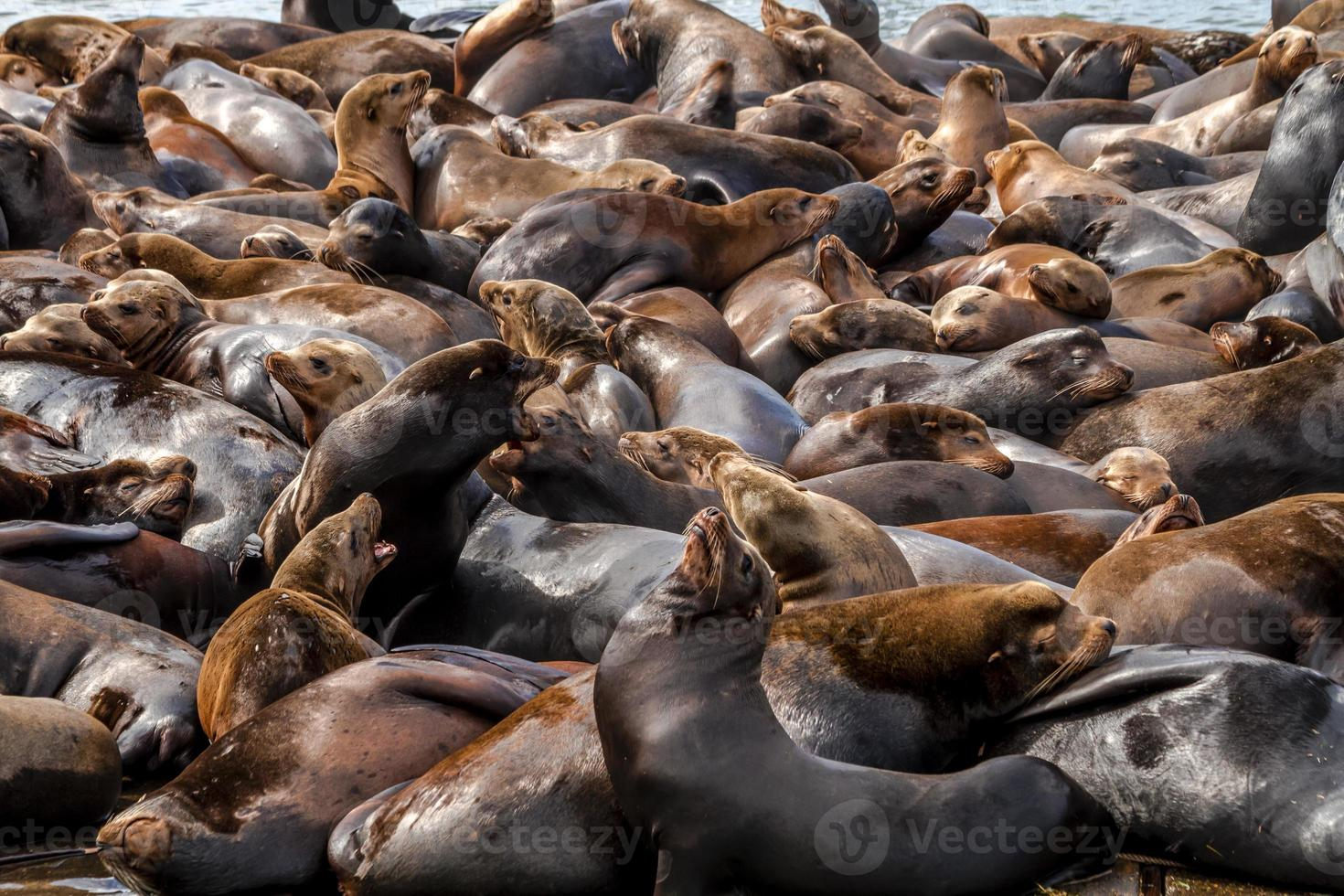 Pacific Northwest Sea Lions and Seals photo