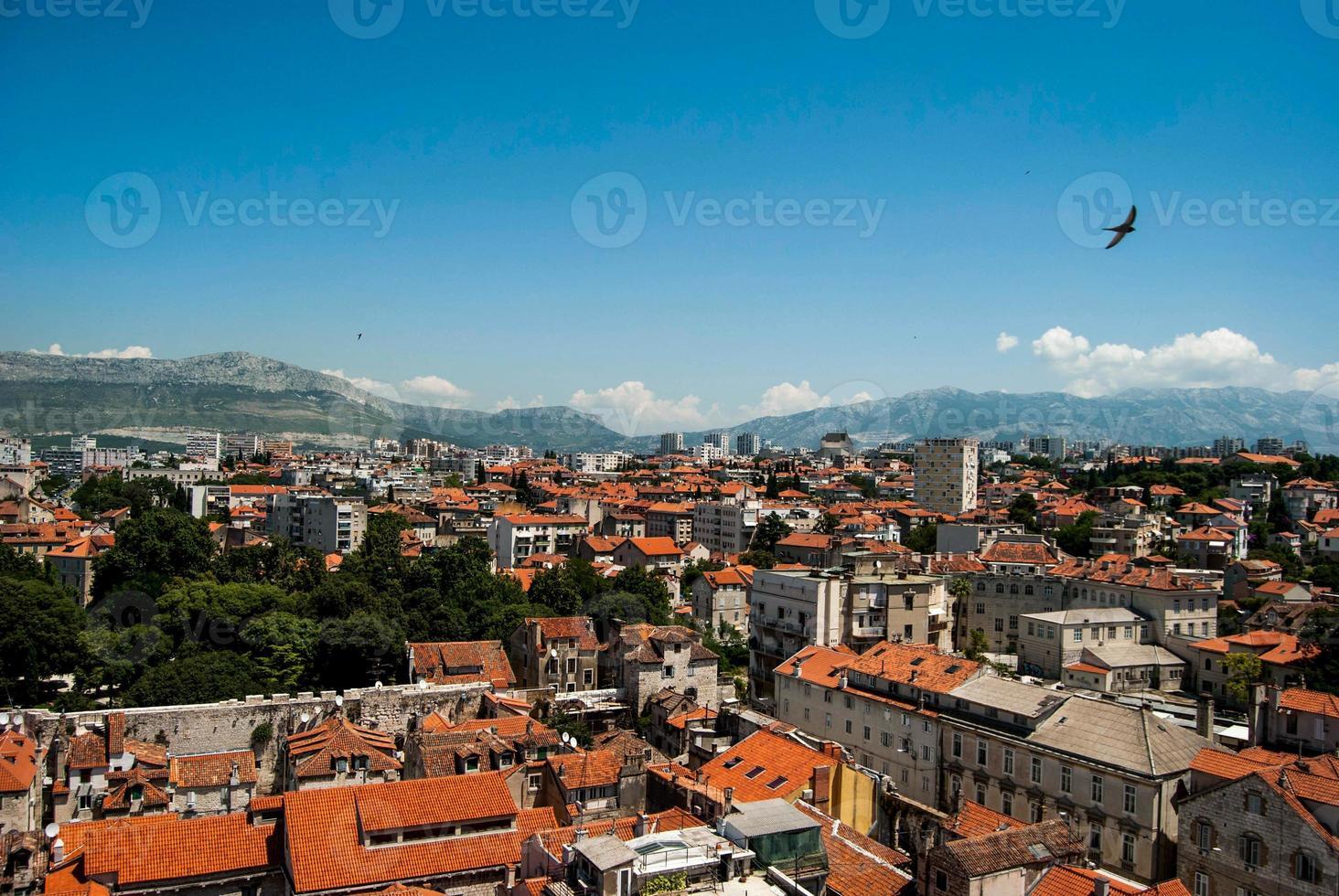 Ver en Split Town, Crotia - Bird. foto