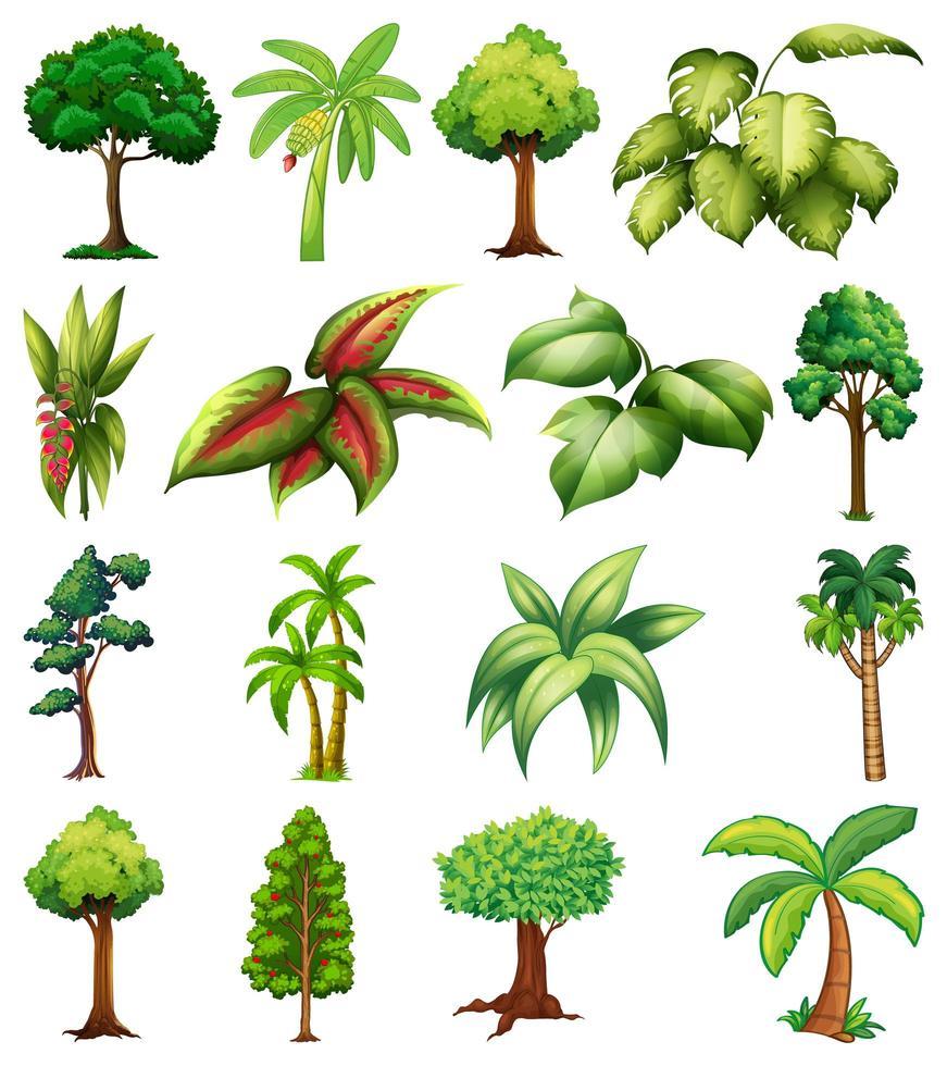 conjunto de variedad de plantas y árboles. vector