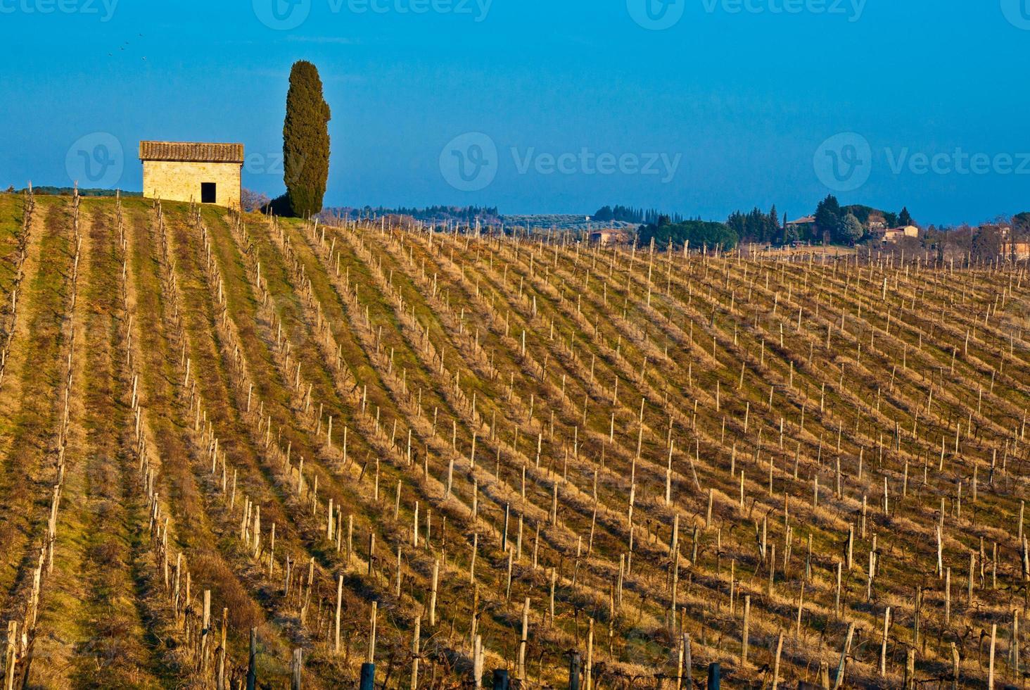 Tuscan vineyard photo