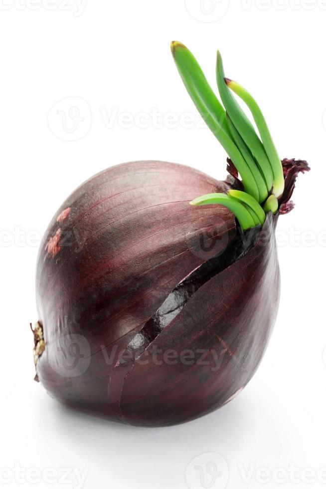 Purple onion photo