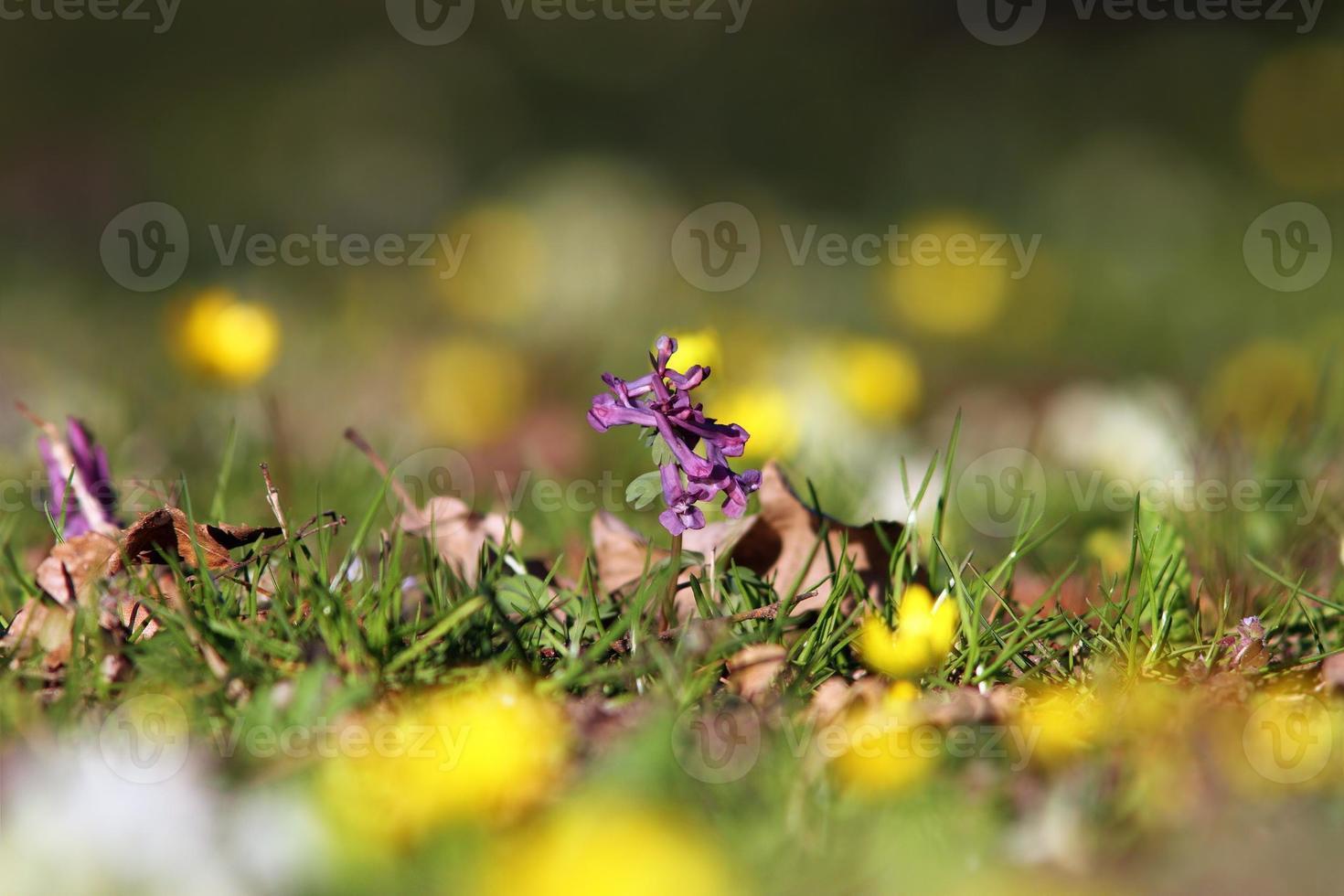 faded flower on wild meadow photo