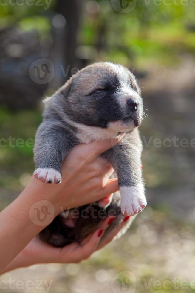 Newborn puppy photo