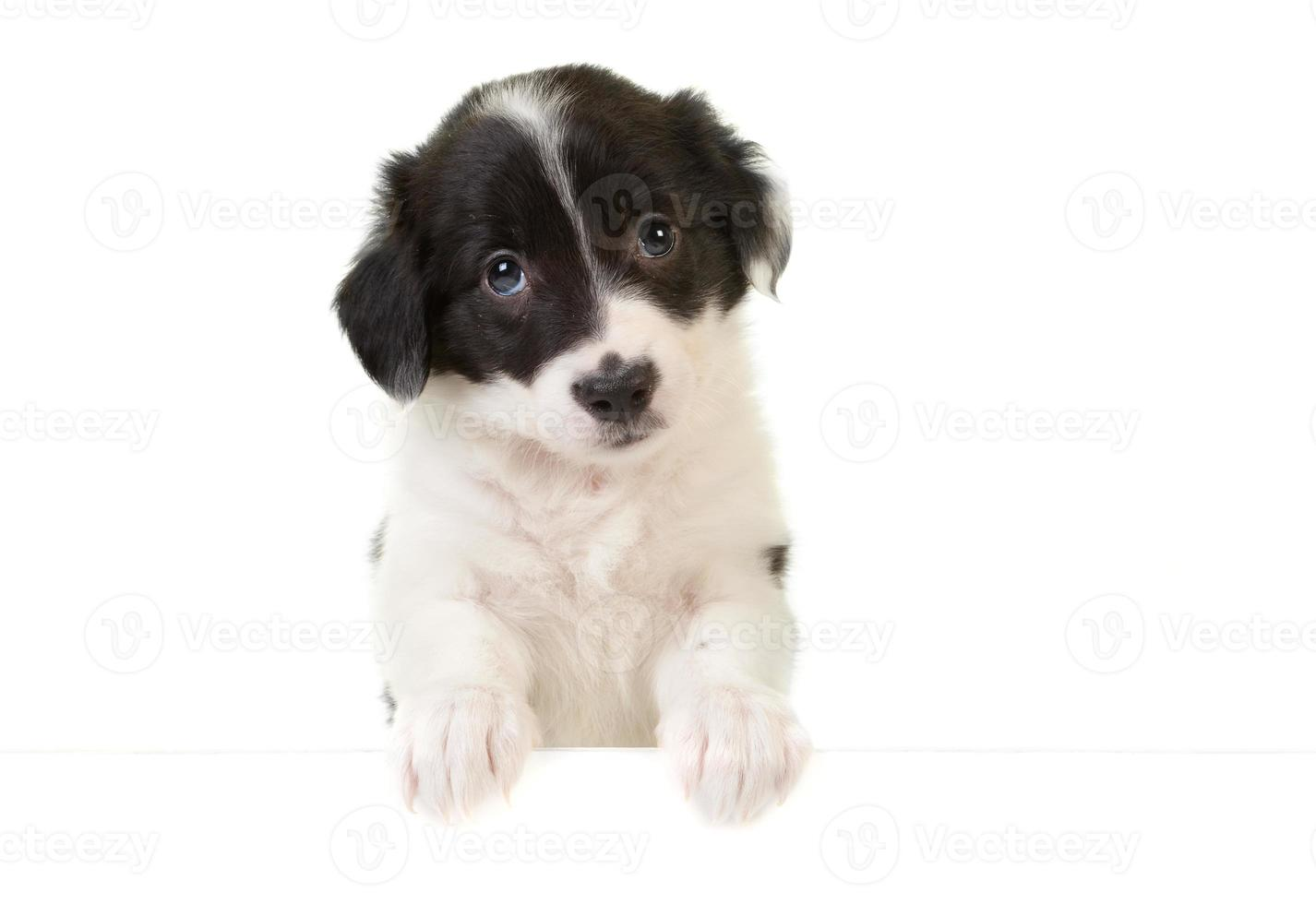 Puppy with a message card photo