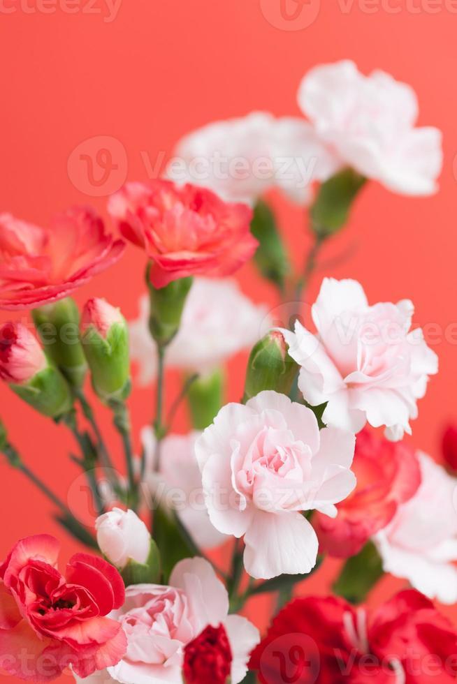 Flower of carnation photo