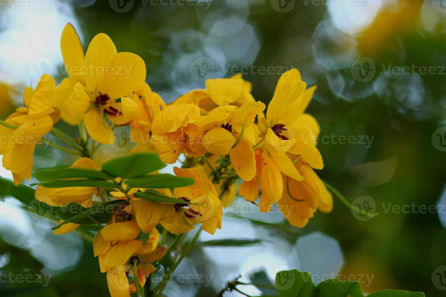 flores amarelas. foto