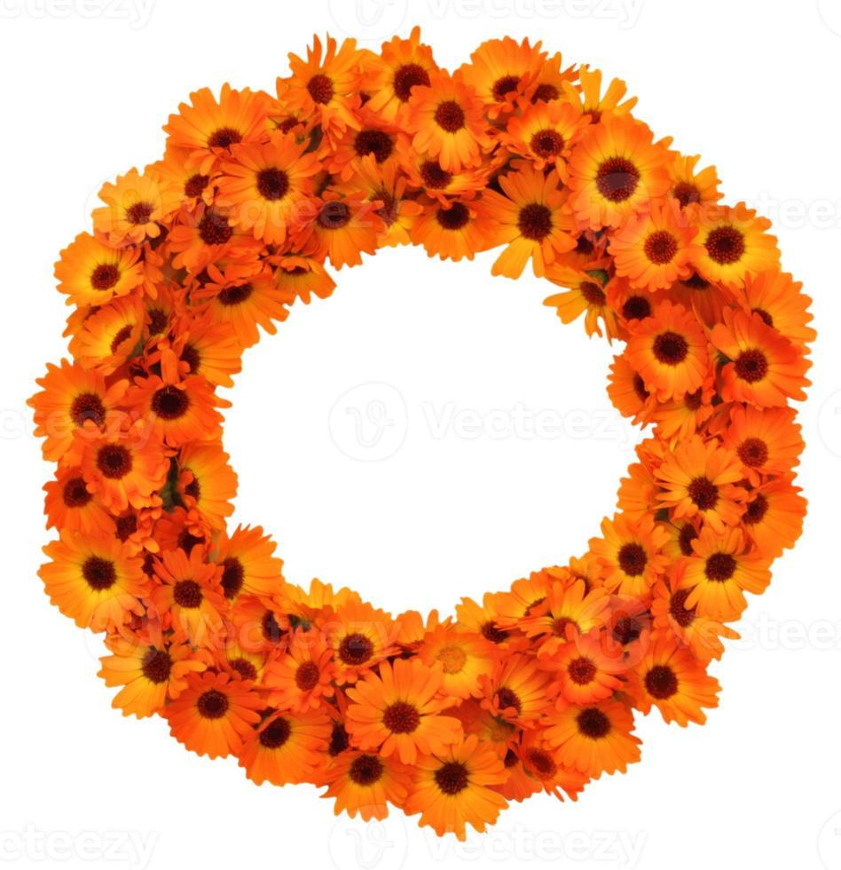 forma de círculo de flores de calêndula isolada. foto