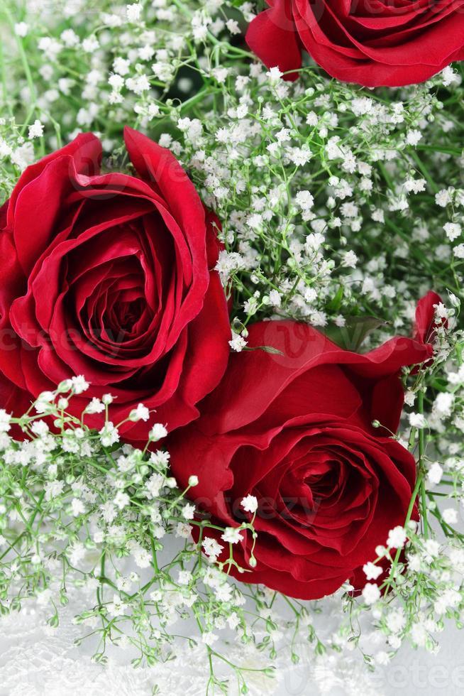 rosas rojas y aliento de bebé foto