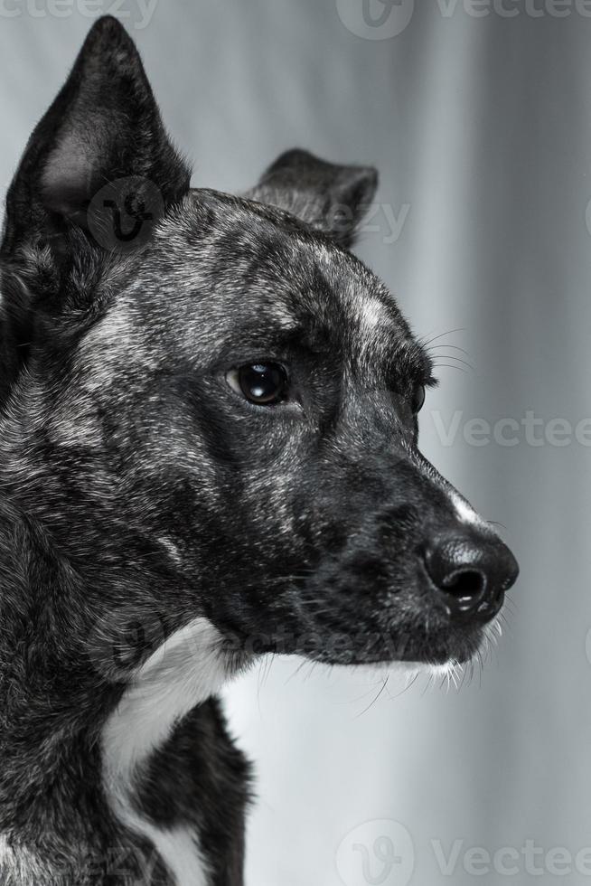 perro anhelante foto