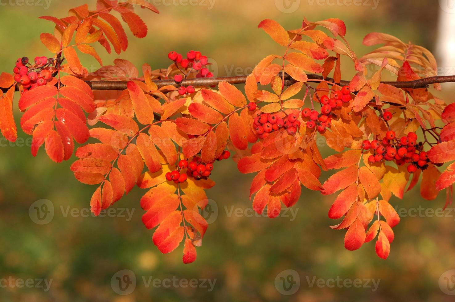 outono foto