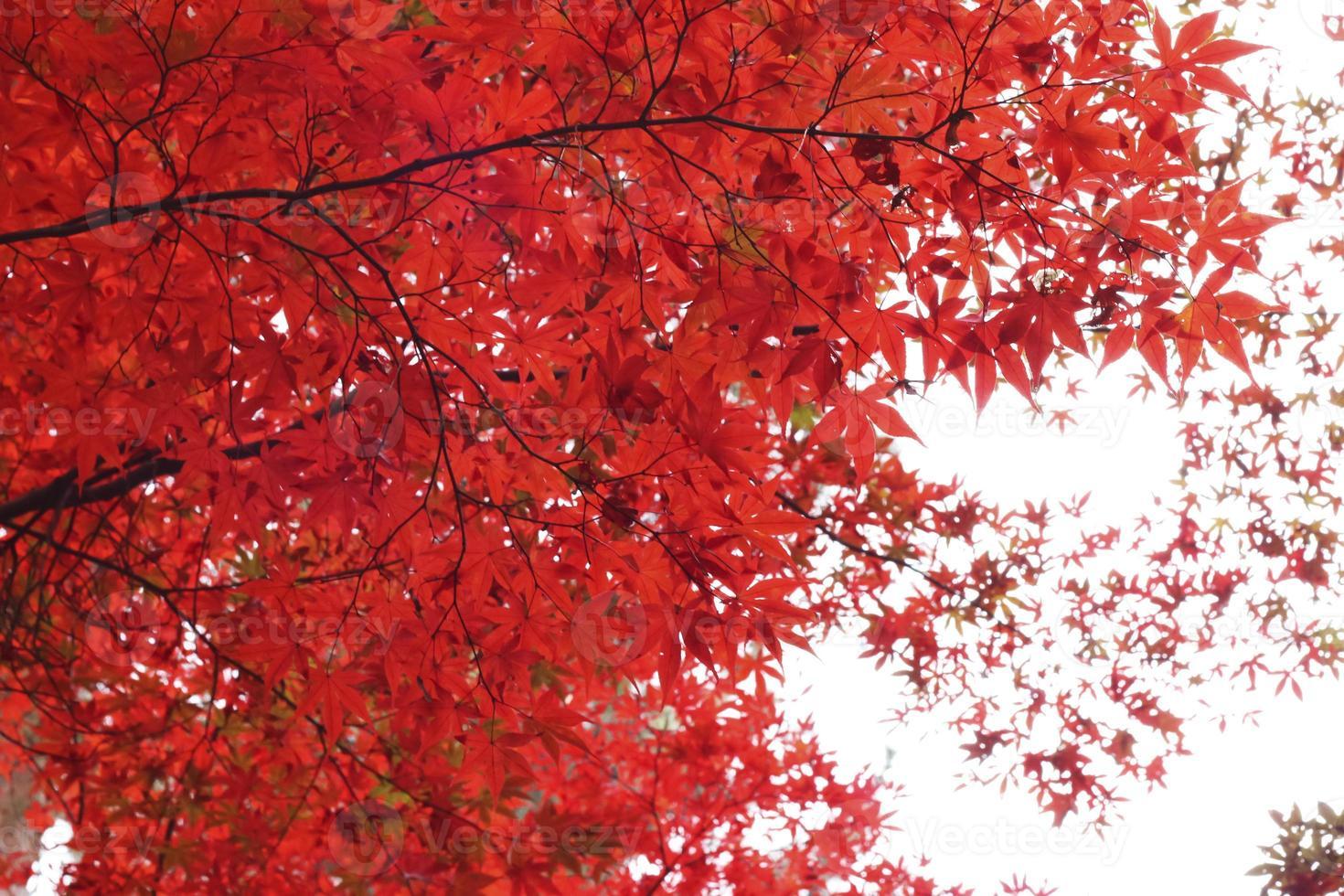 hojas otoñales las hojas de otoño foto