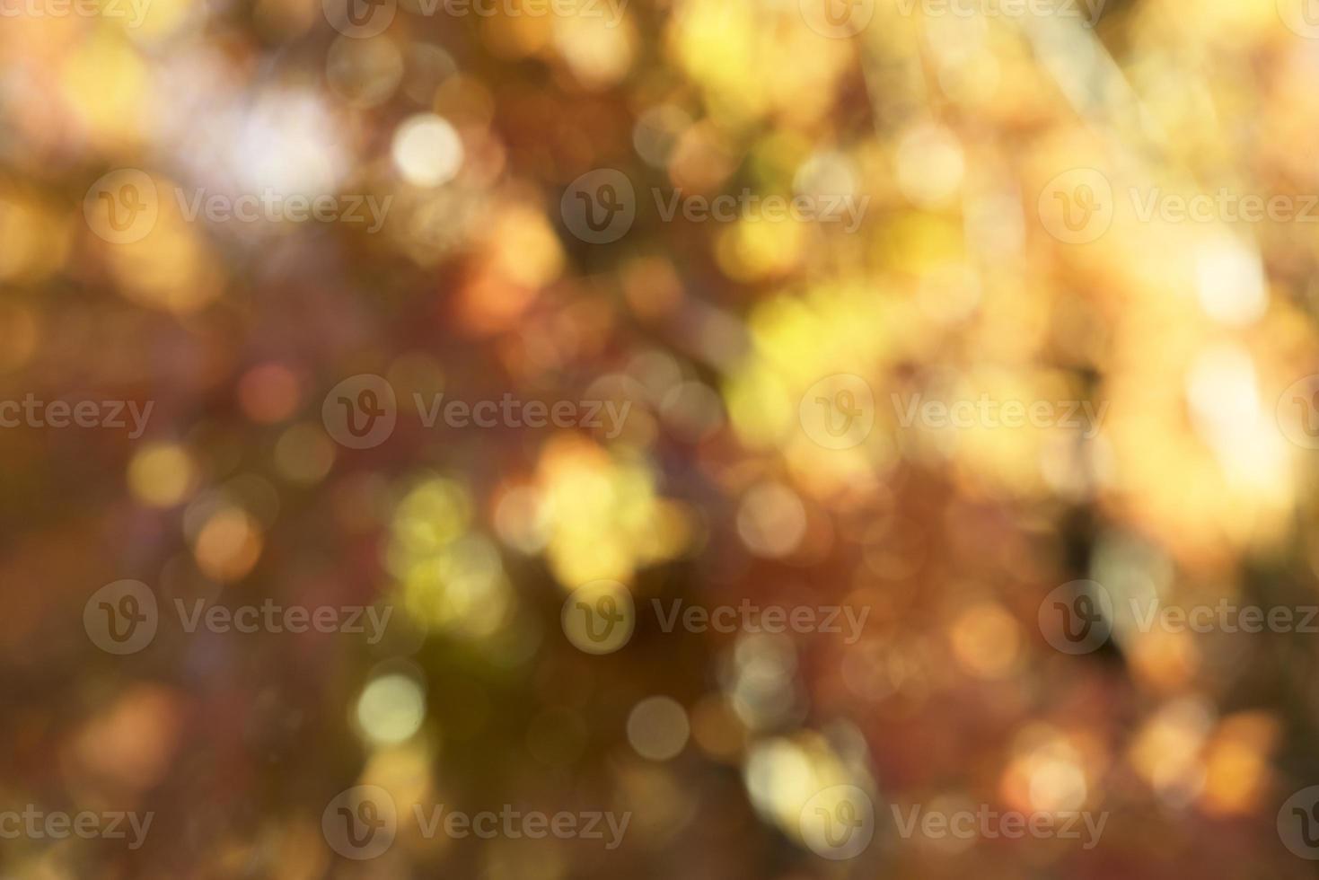 hoja de otoño foto
