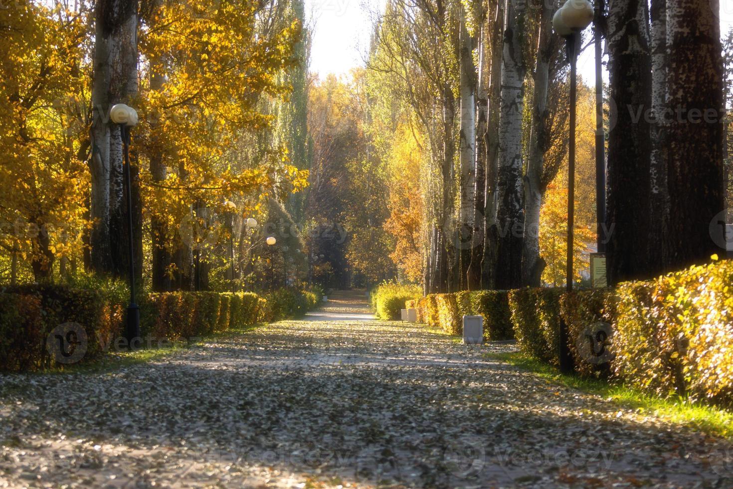 estrada de outono foto