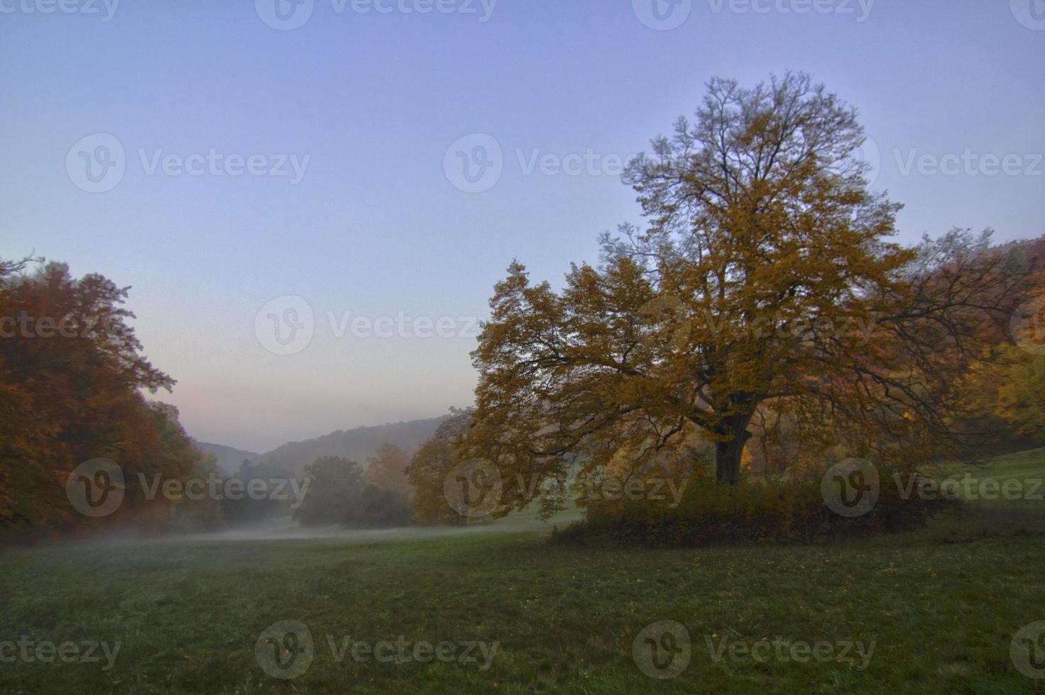 niebla de otoño foto