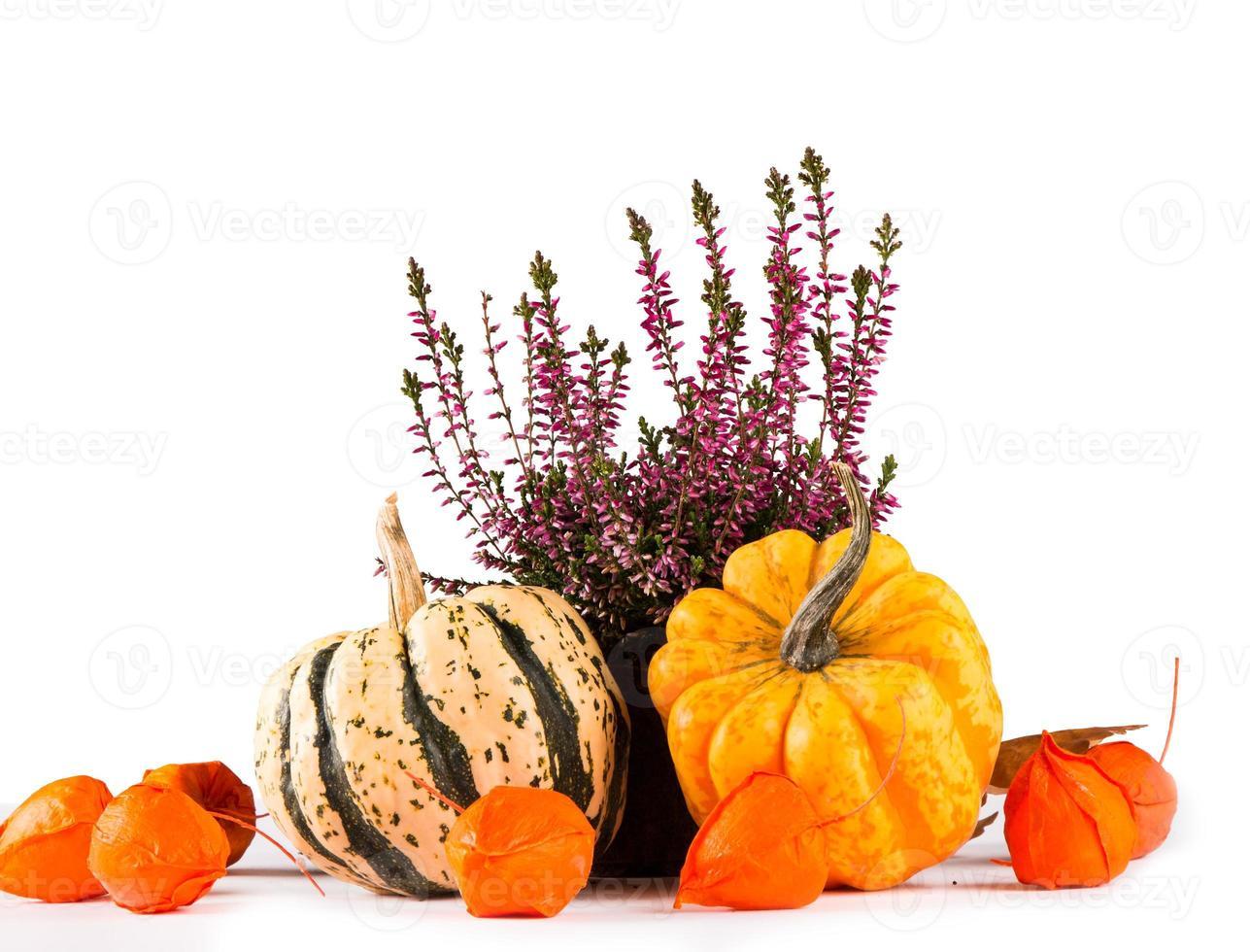 autumn concept photo