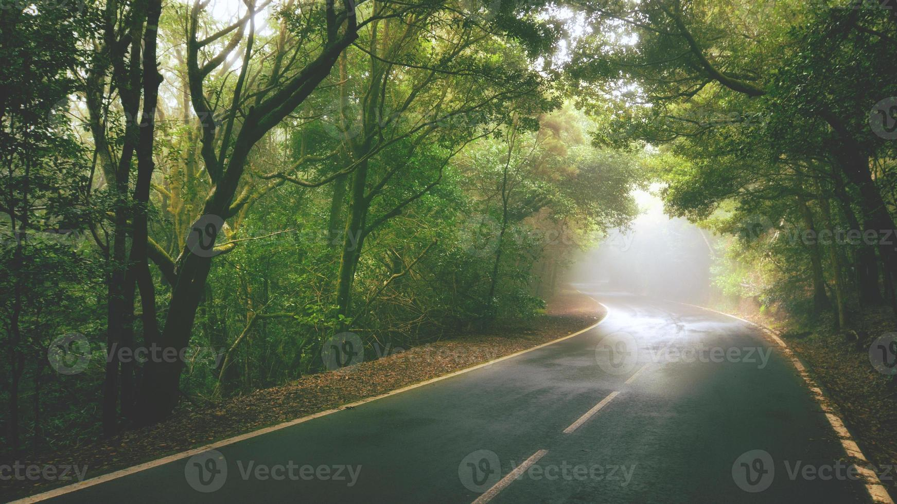 camino de otoño foto