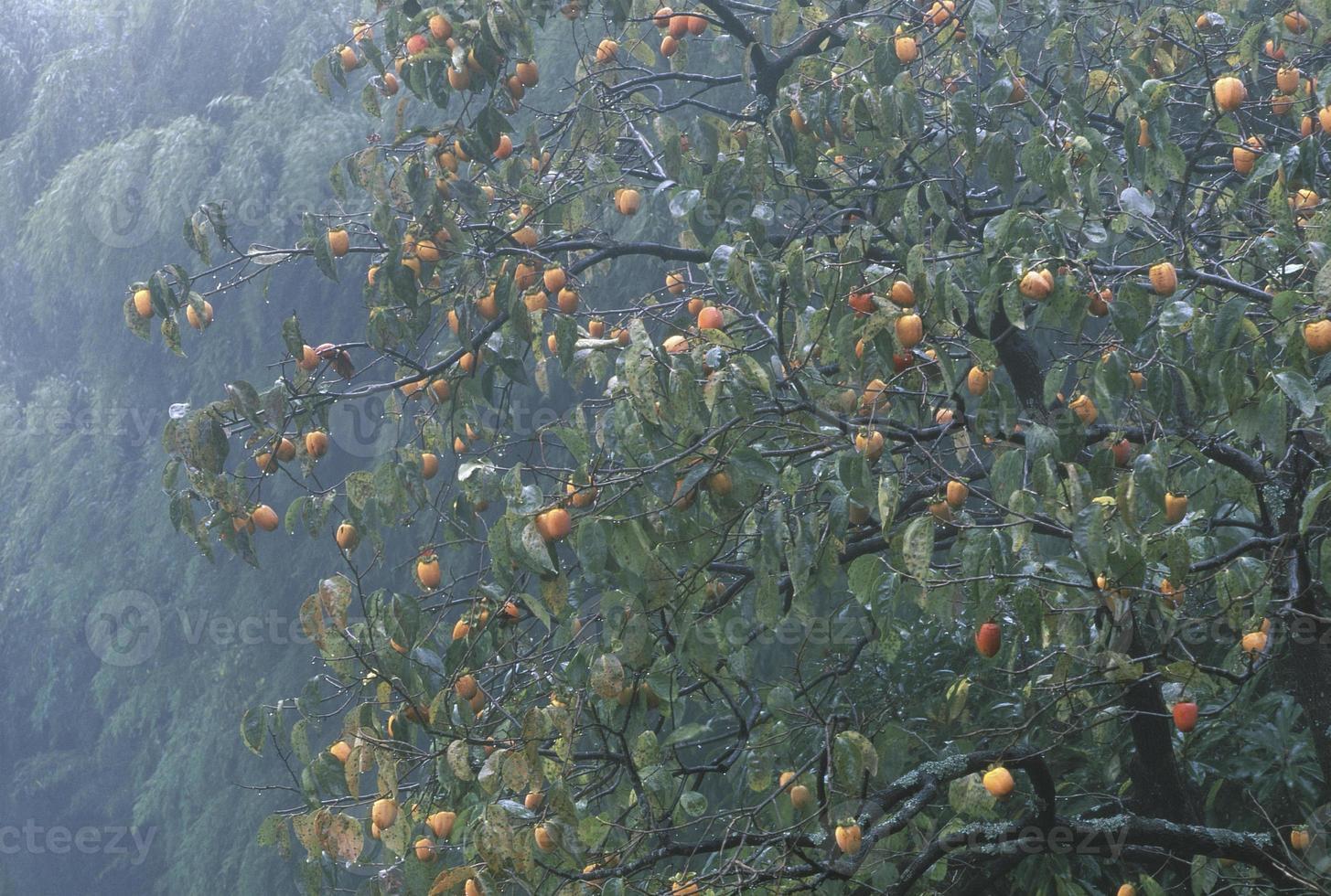 lluvia de otoño foto
