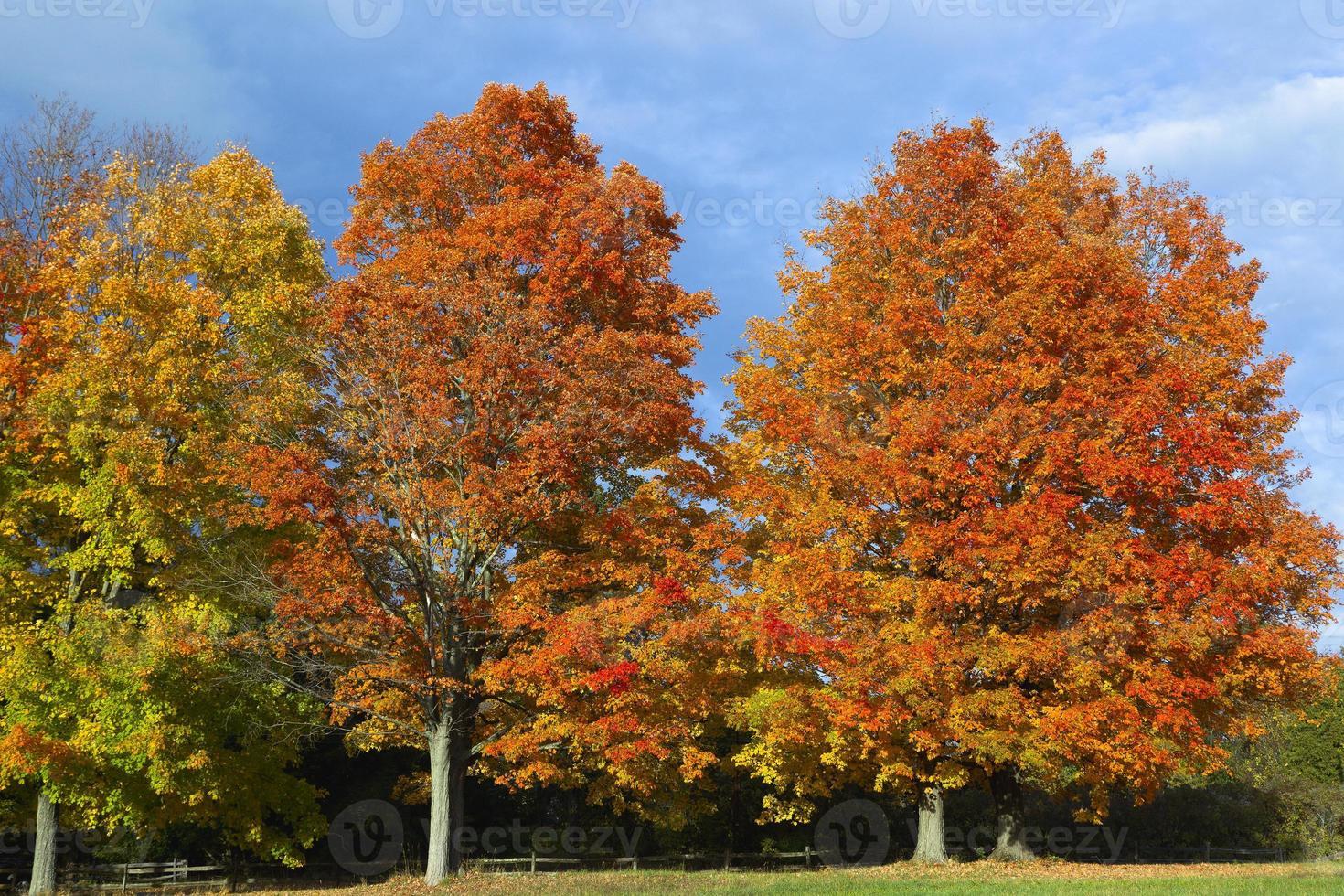 outono colorido foto