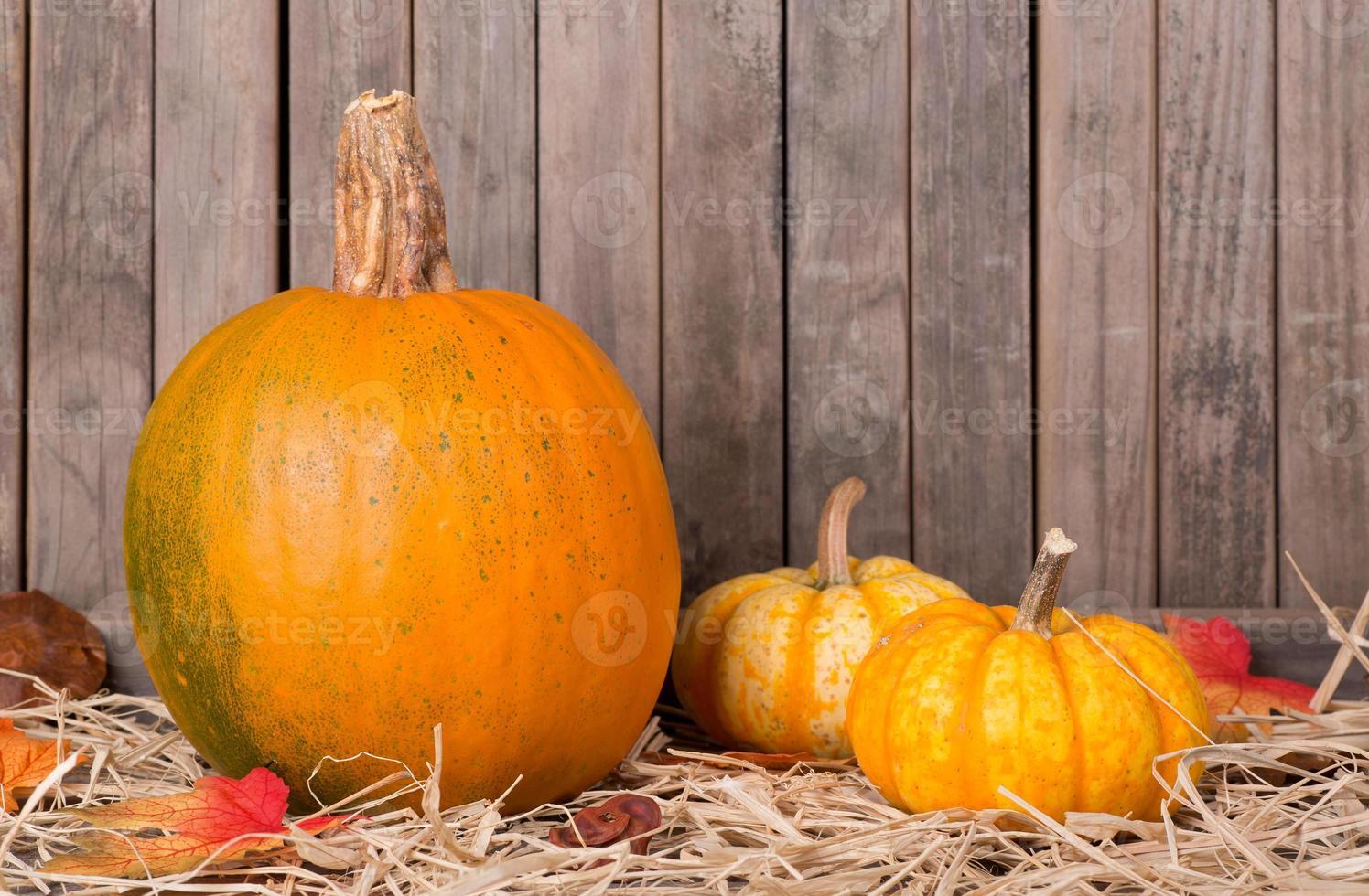 calabazas de otoño foto