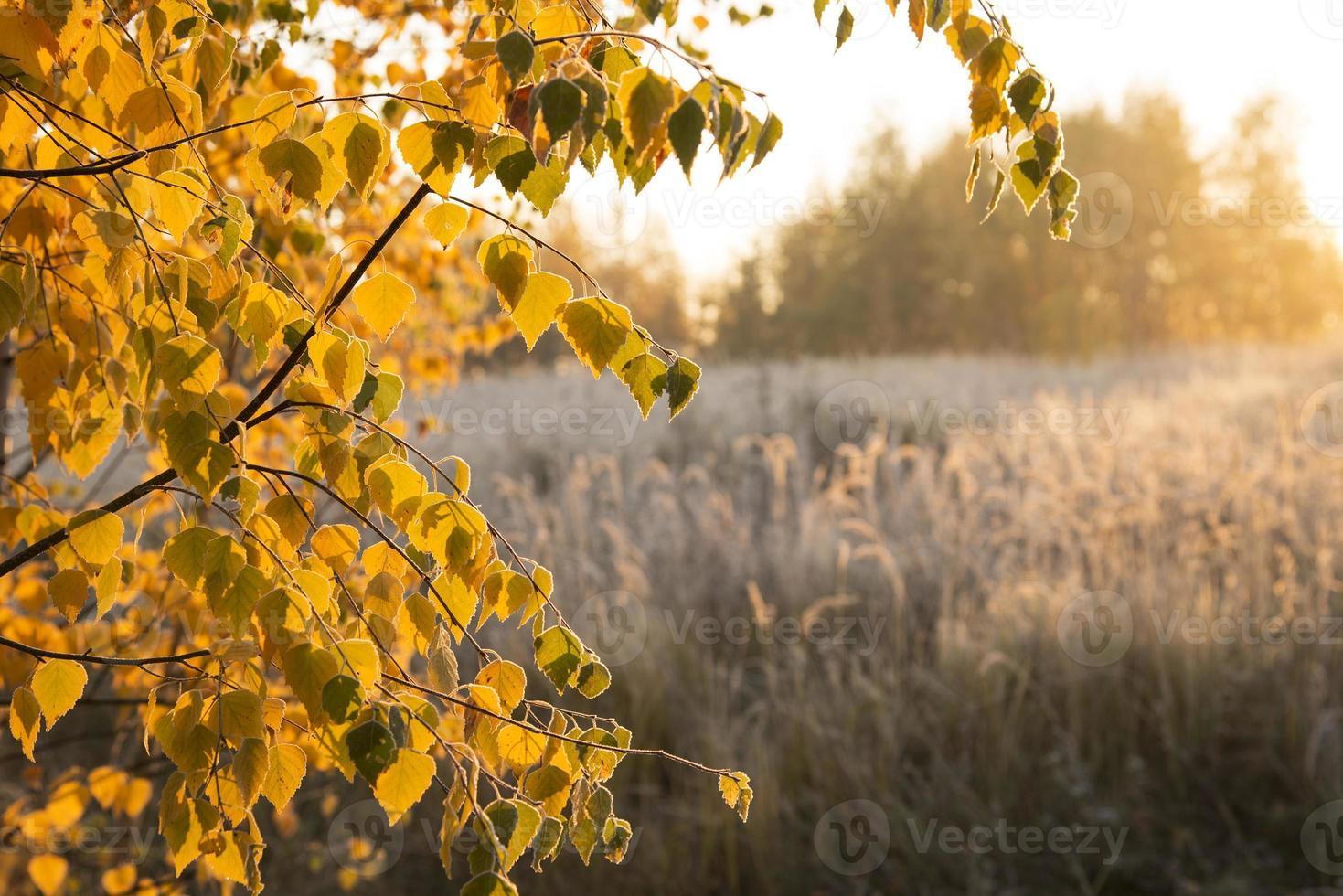 amanecer de otoño foto
