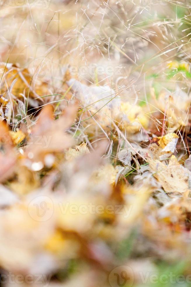 Autumn Floor photo