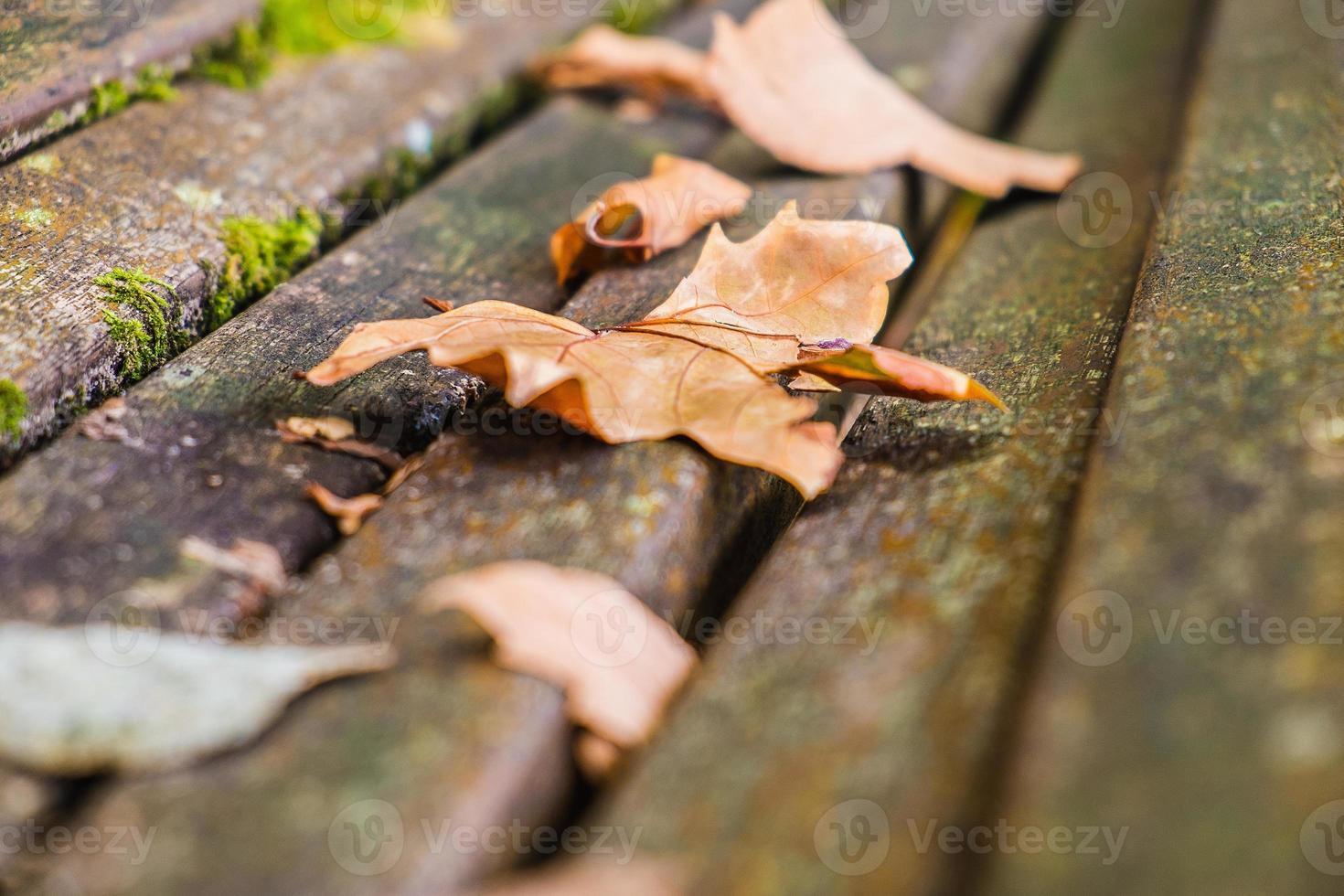 hojas de otoño foto