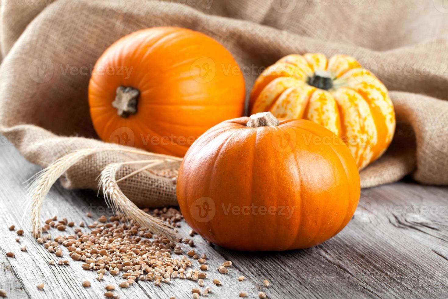 abóboras de outono foto