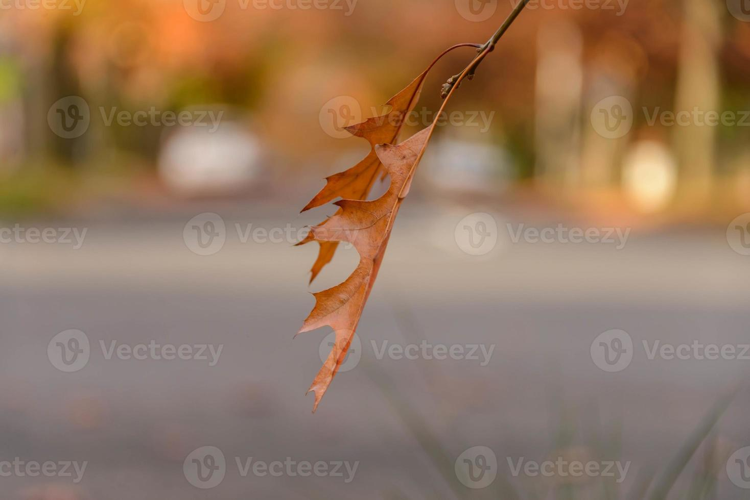 estação do outono foto