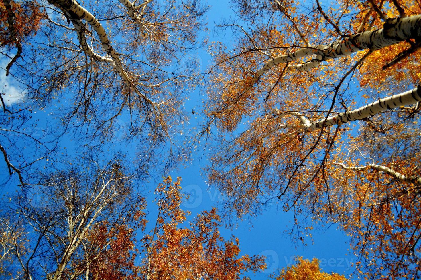 Etudes de otoño foto