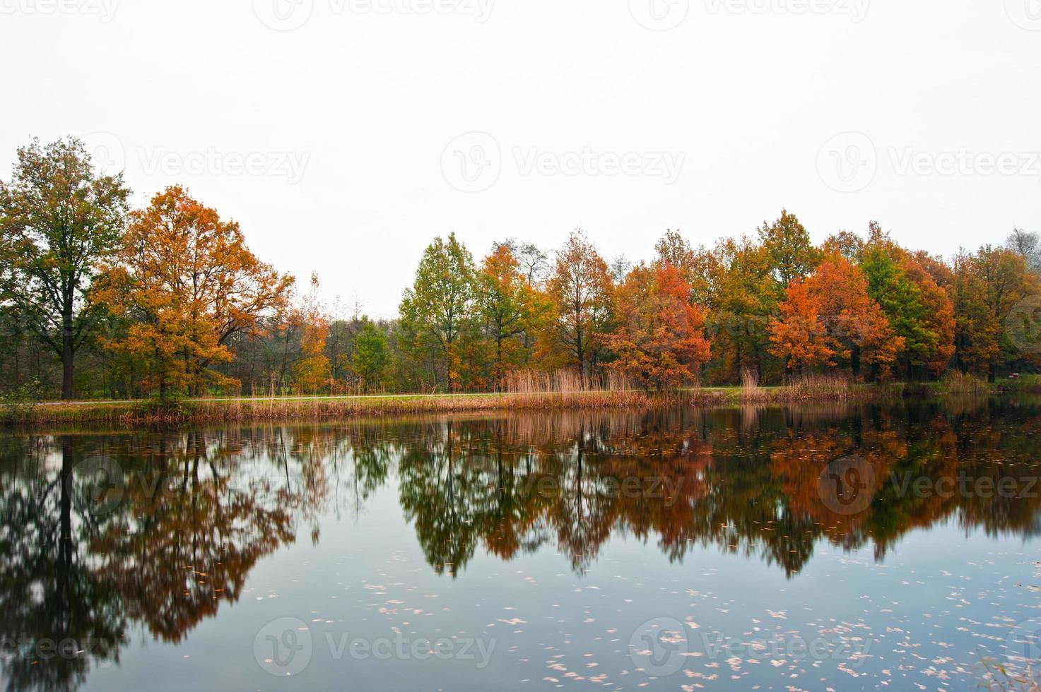 autumn view photo