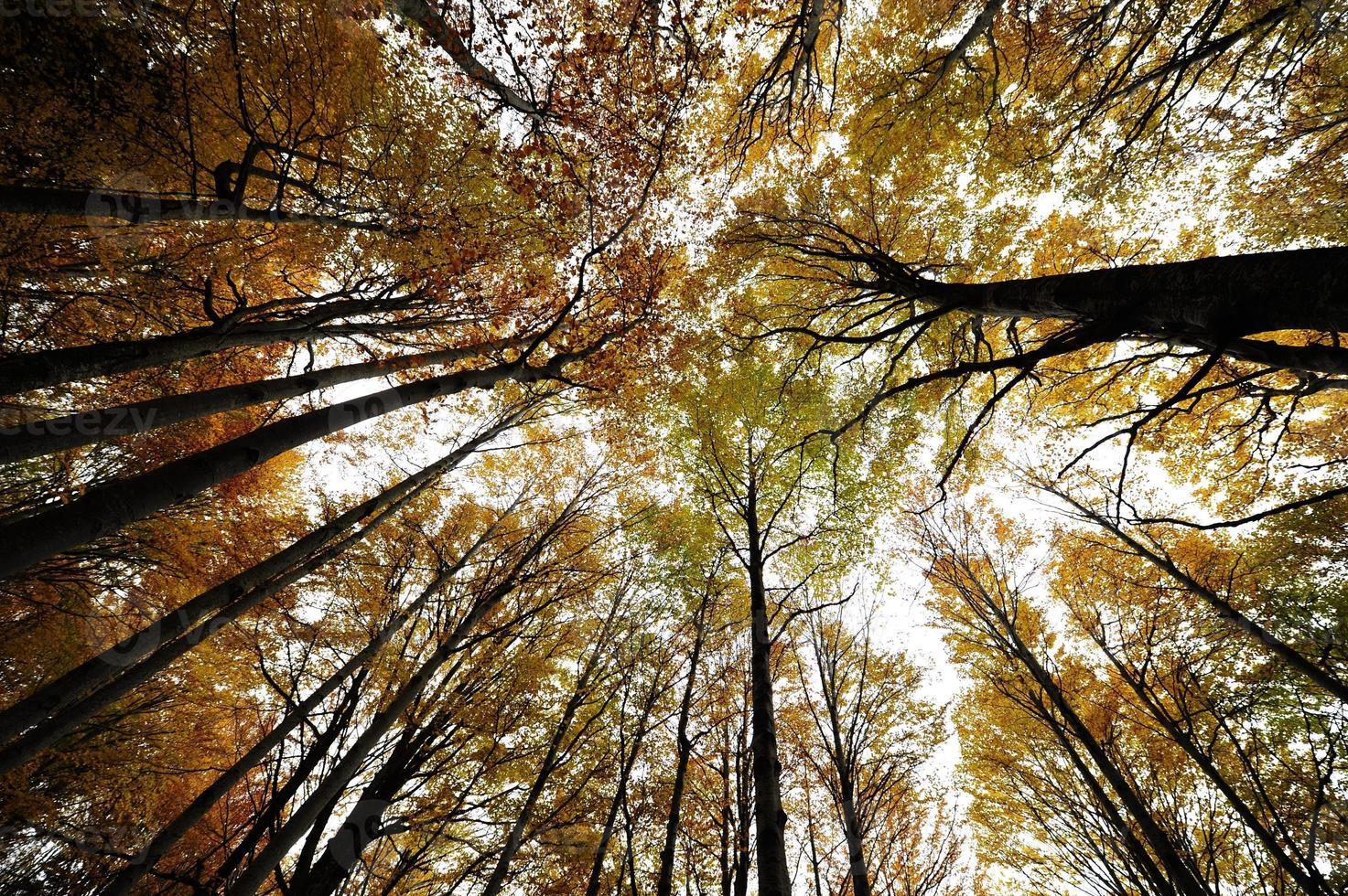 fundo de outono foto